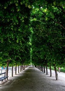 Emily in Paris in the garden of the Palais Royal by PARIS BY EMY
