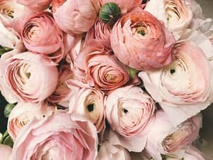 La vie en rose by PARIS BY EMY